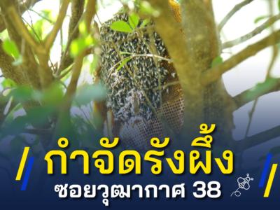 กำจัดรังผึ้ง #ซอยวุฒากาศ 38